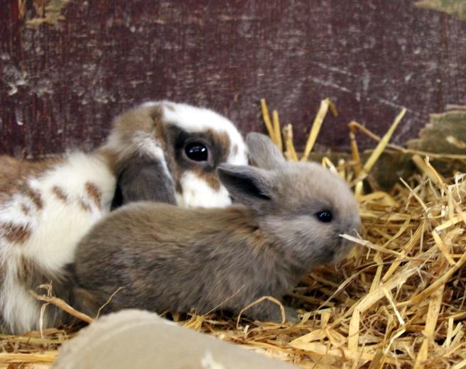 bunnybaby