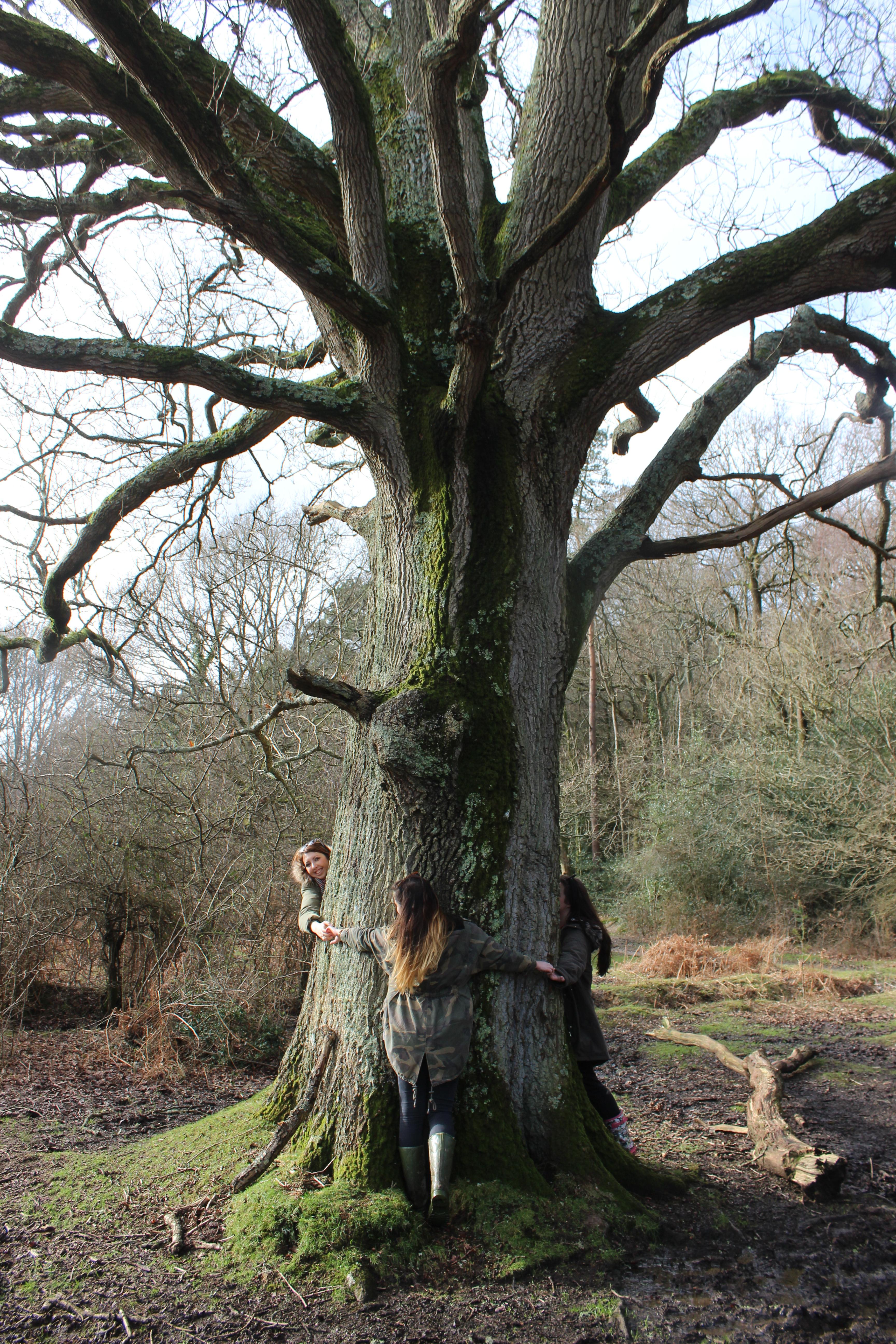 tree_huggers